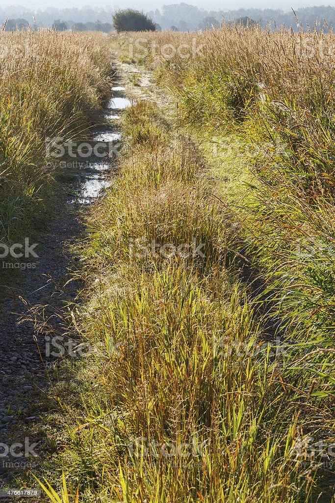 Dirt road on a meadow royalty-free stock photo