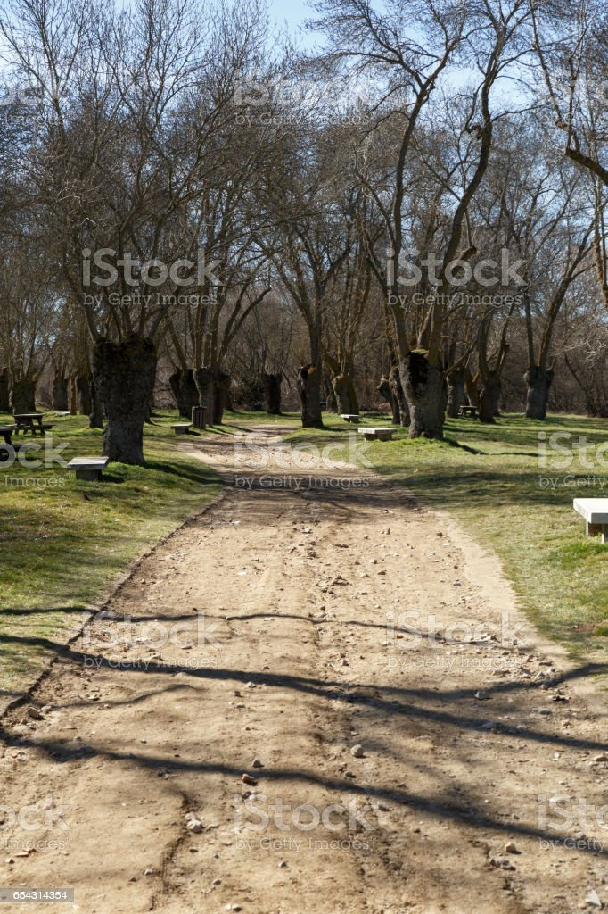 Dirt road through a forest stock photo