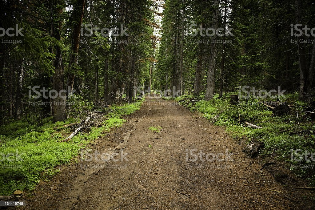 Dirt Road Through Enchanted Forest stock photo