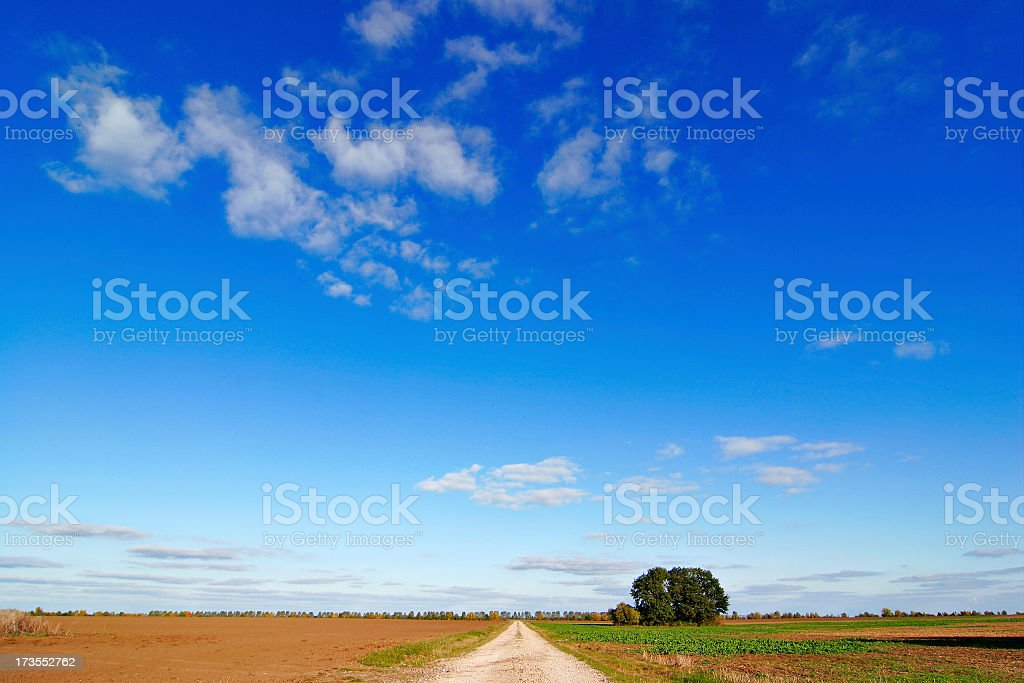 Dirt Road through Farm Fields under Blue Sky in Autumn stock photo
