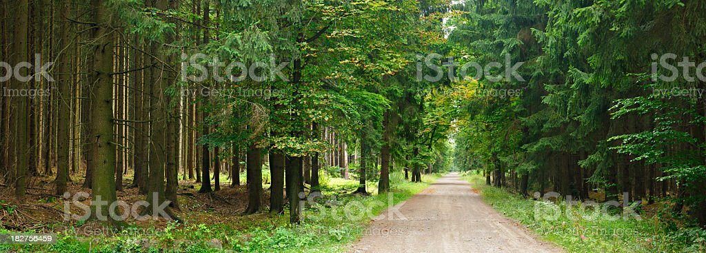 Dirt Road through Spruce Tree Forest royalty-free stock photo