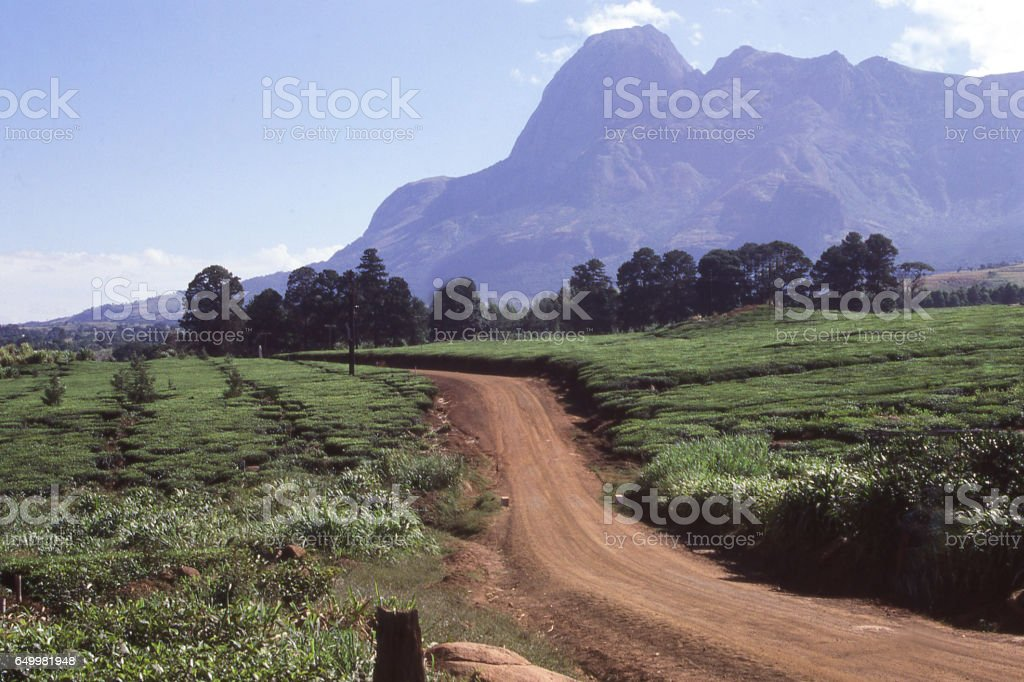 Dirt road through tea plantation in southern Malawi Africa with the Mulanje Massif a major batholith in the distance Malawi Africa stock photo