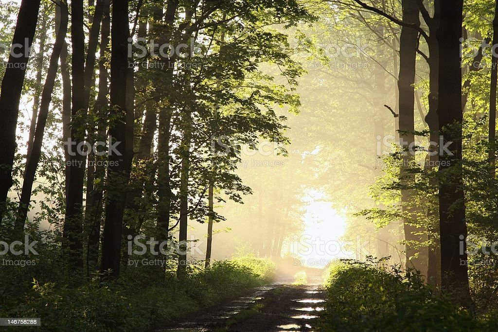 Dirt road through the forest royalty-free stock photo