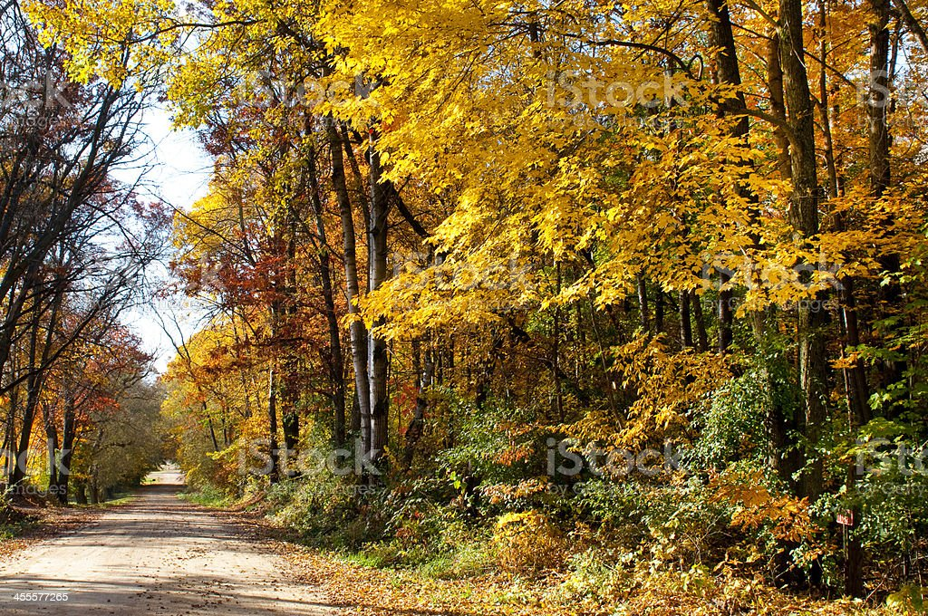 Dirt Road with Autumn Trees royalty-free stock photo