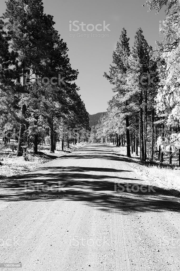 Dirt Road With Trees In Black And White royalty-free stock photo