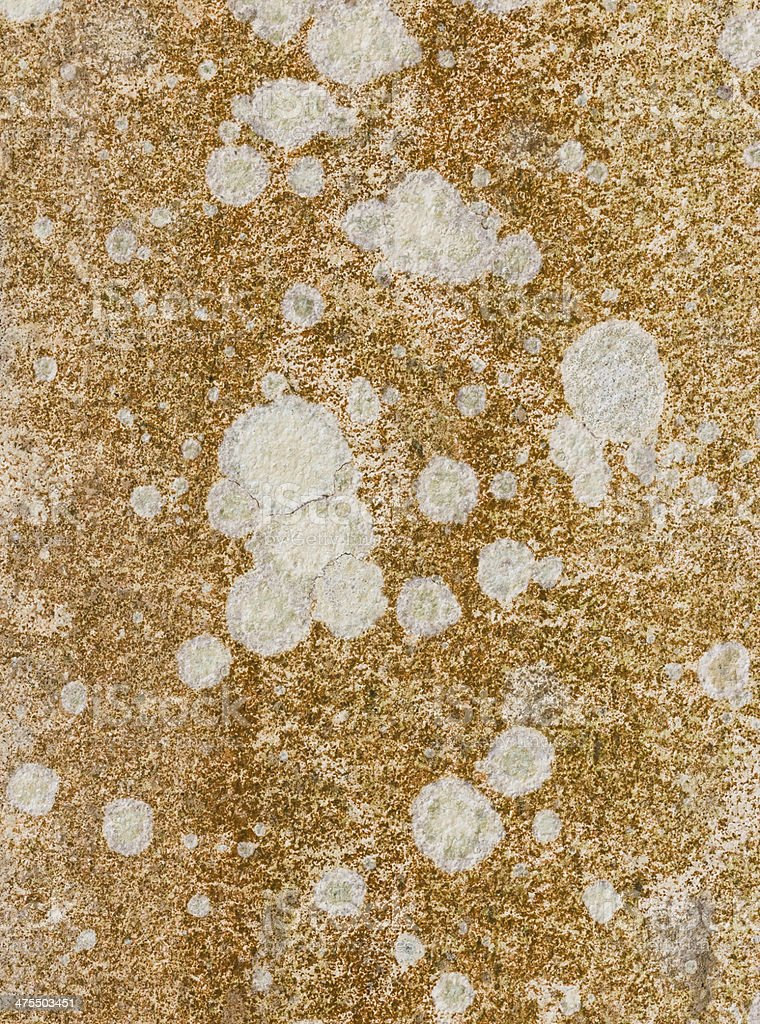 dirty brown mold stock photo