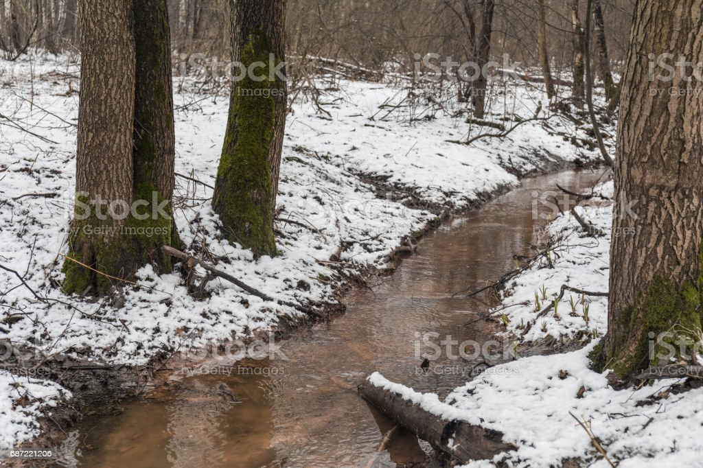 Dirty forest creek  forest stock photo
