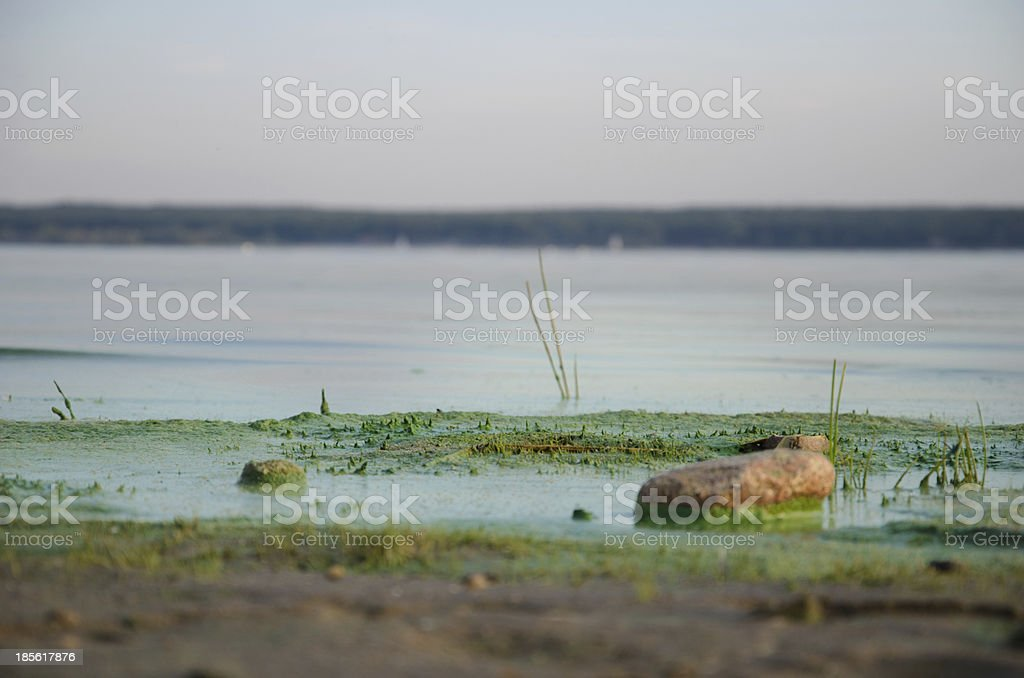 Dirty, green beach. stock photo