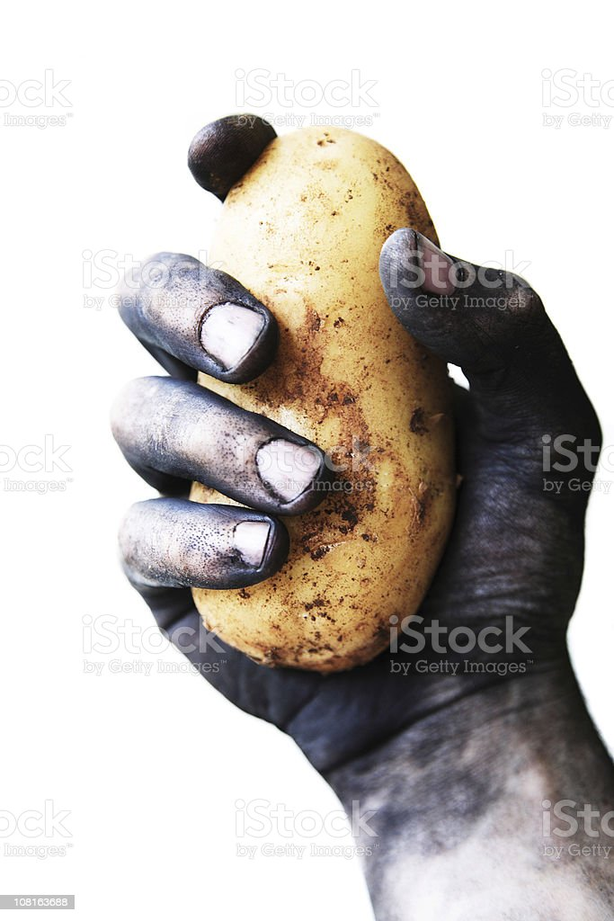 Dirty Man's Hand Holding Potato, Isolated on White stock photo