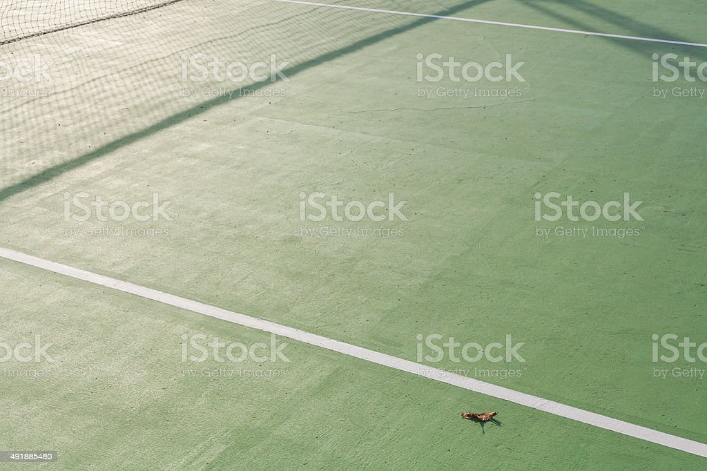 Dirty paddle tennis  field texture white lines with old leaf stock photo