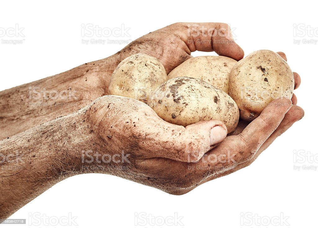 Dirty potatoes in male hands stock photo
