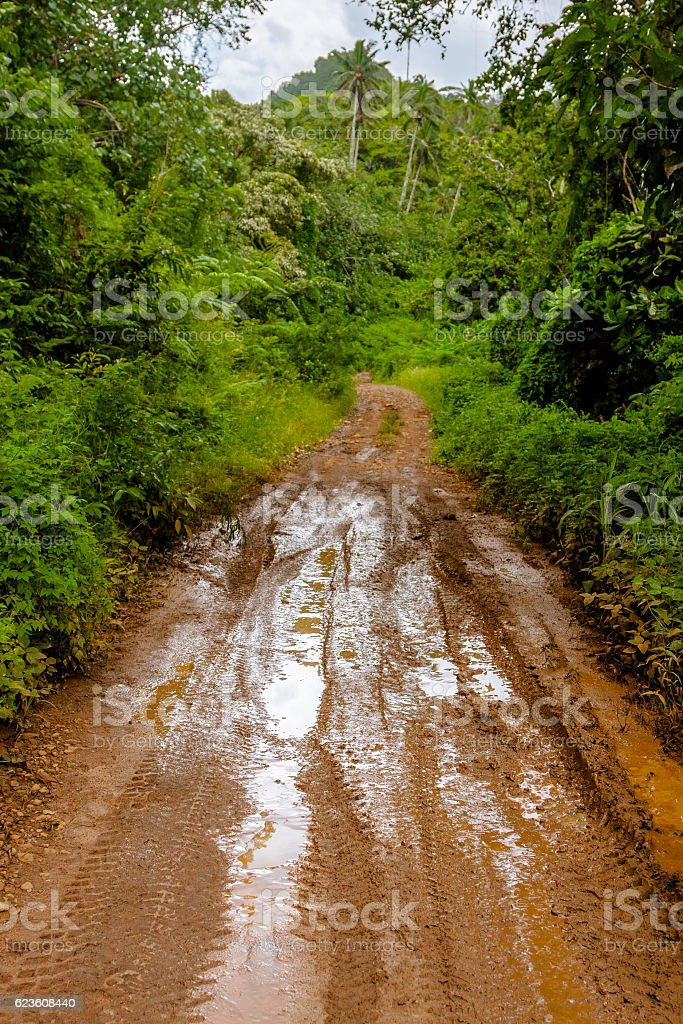 Dirty Road in Tropical Rainforest stock photo