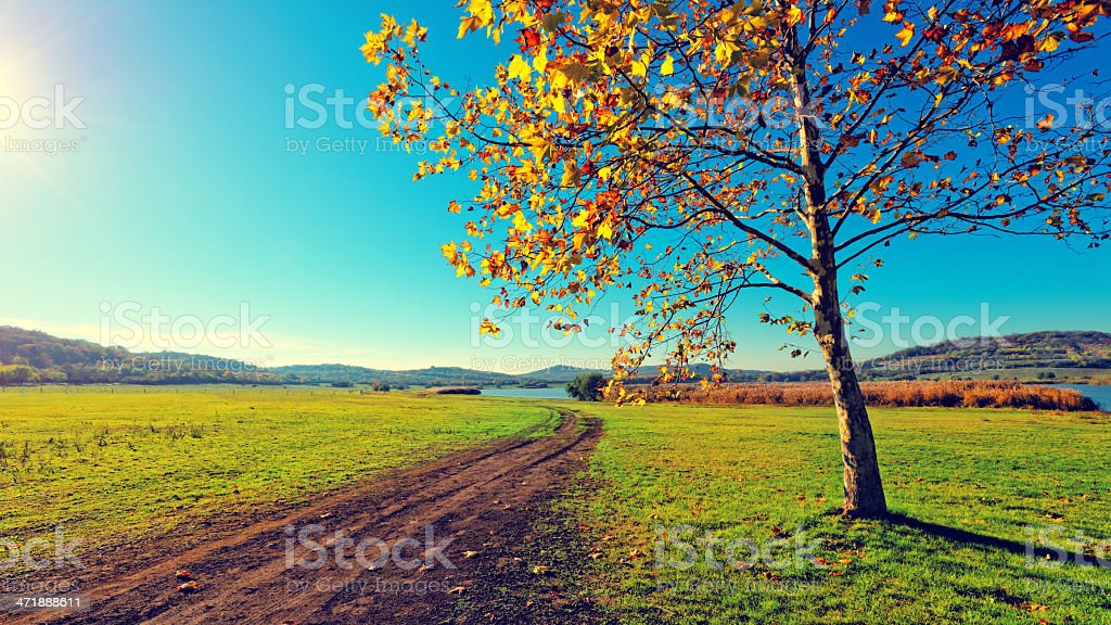 Dirty road to nowhere royalty-free stock photo