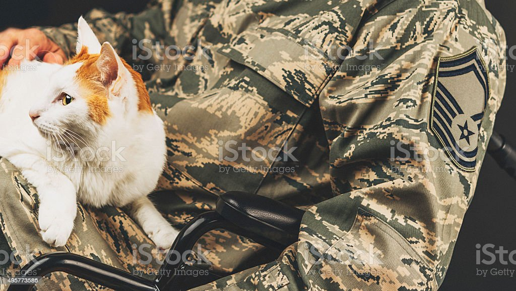 Disabled military service member holding therapy cat in a wheelchair stock photo