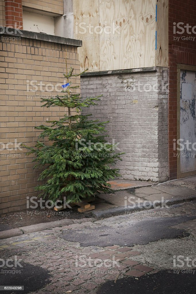 Discarded Christmas Tree stock photo