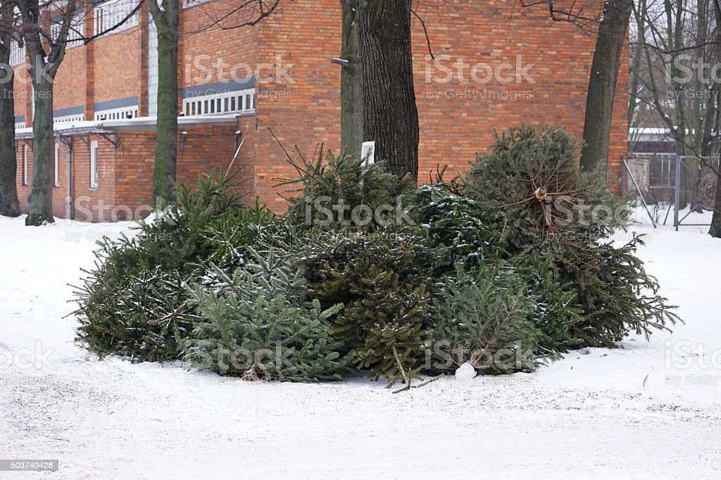 discarded christmas trees stock photo