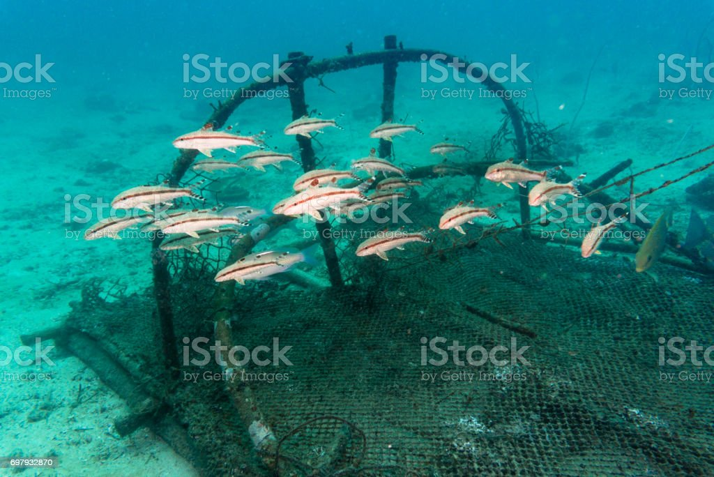 Discarded Fishing Ghost Nets in Ocean Environmental Damage stock photo