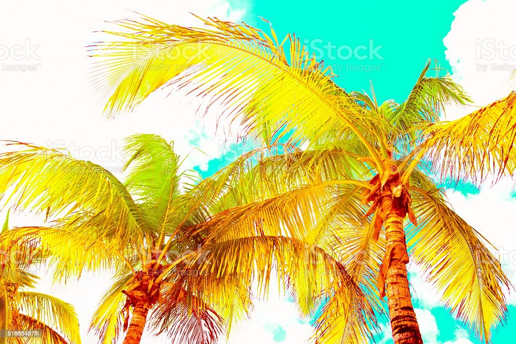 Discolored Palm Trees stock photo