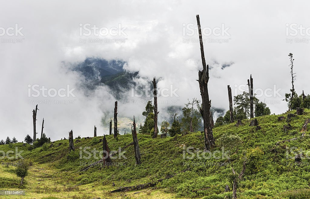 Disease and deforestation, Arunachal Pradesh, India. royalty-free stock photo