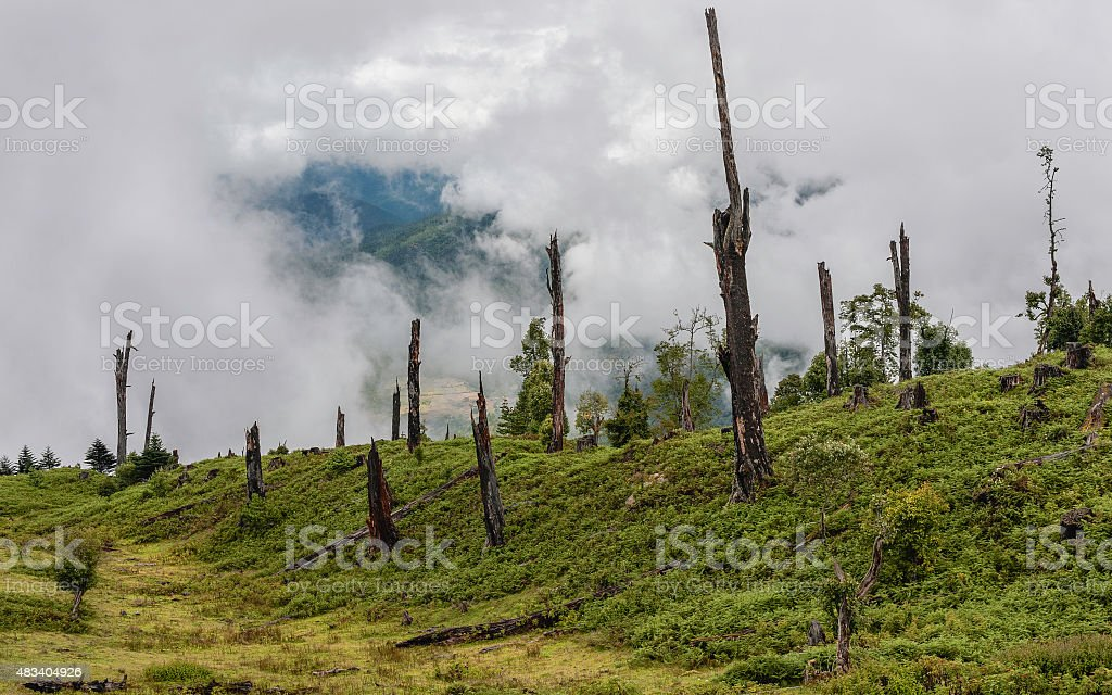 Disease and deforestation, Arunachal Pradesh, India. stock photo