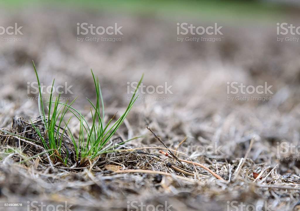 Diseased lawns stock photo
