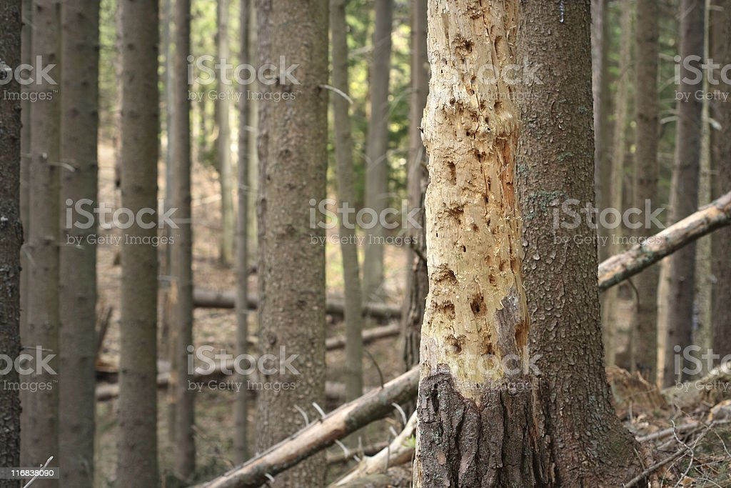 Diseased Tree stock photo