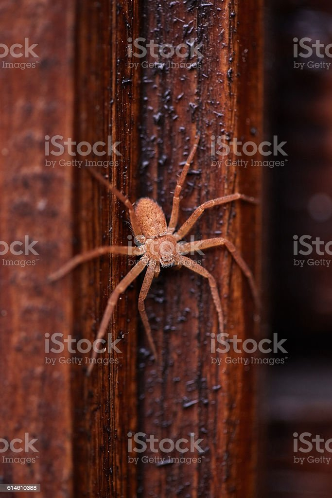 Disguised spider stock photo