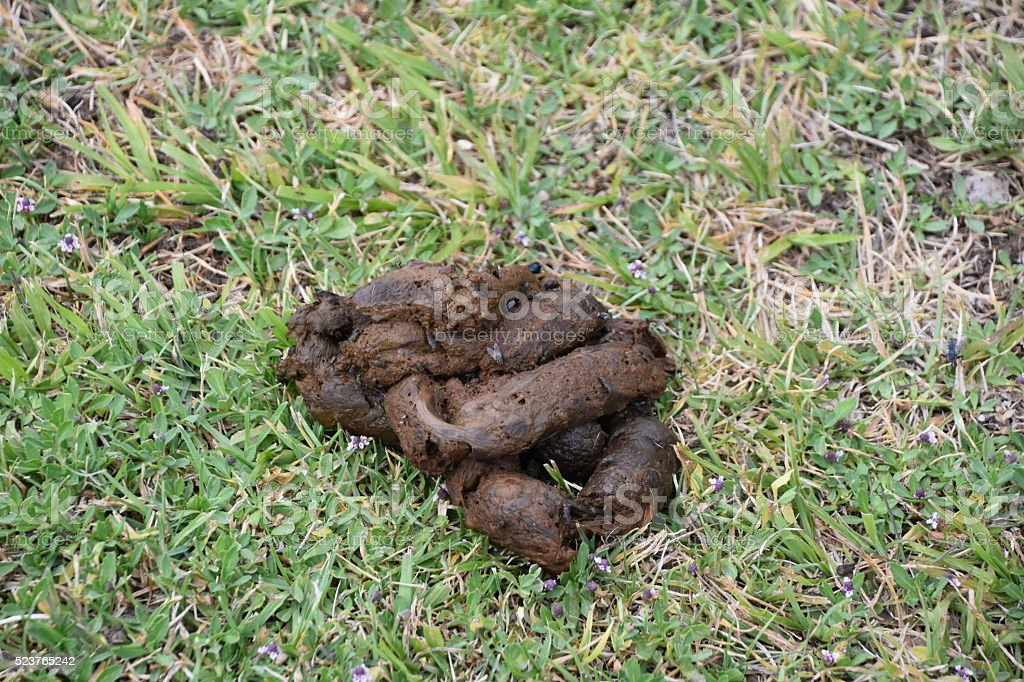 Disgusting dog poo stock photo