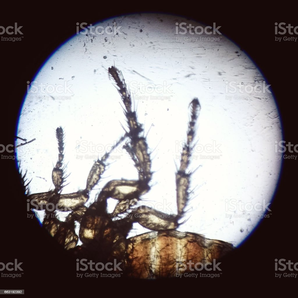 Disgusting insect hairy legs macro stock photo