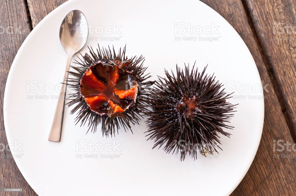 dish of sea urchins stock photo