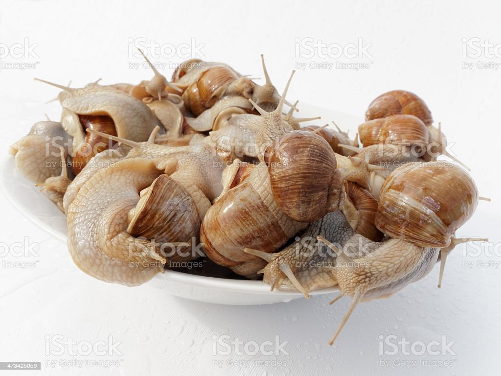 dish of snails stock photo