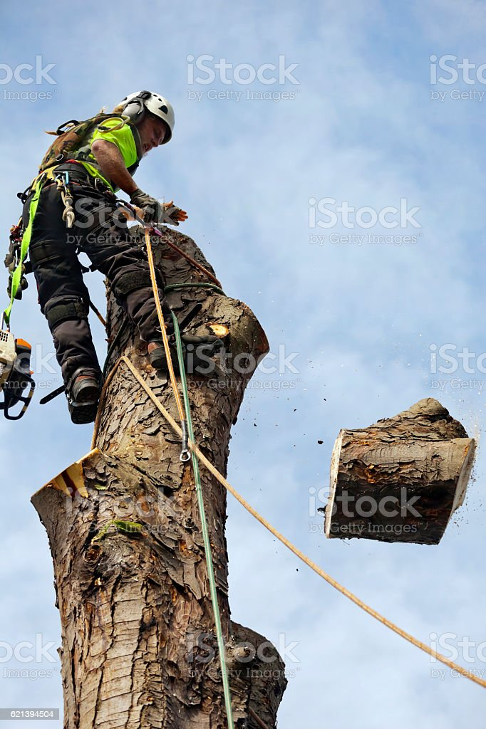 Dismantling of Tree Trunk by Tree Surgeon stock photo
