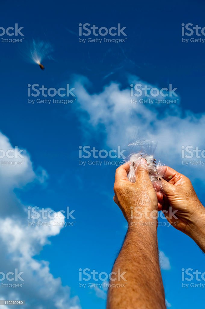 dispersing seed pod wish royalty-free stock photo