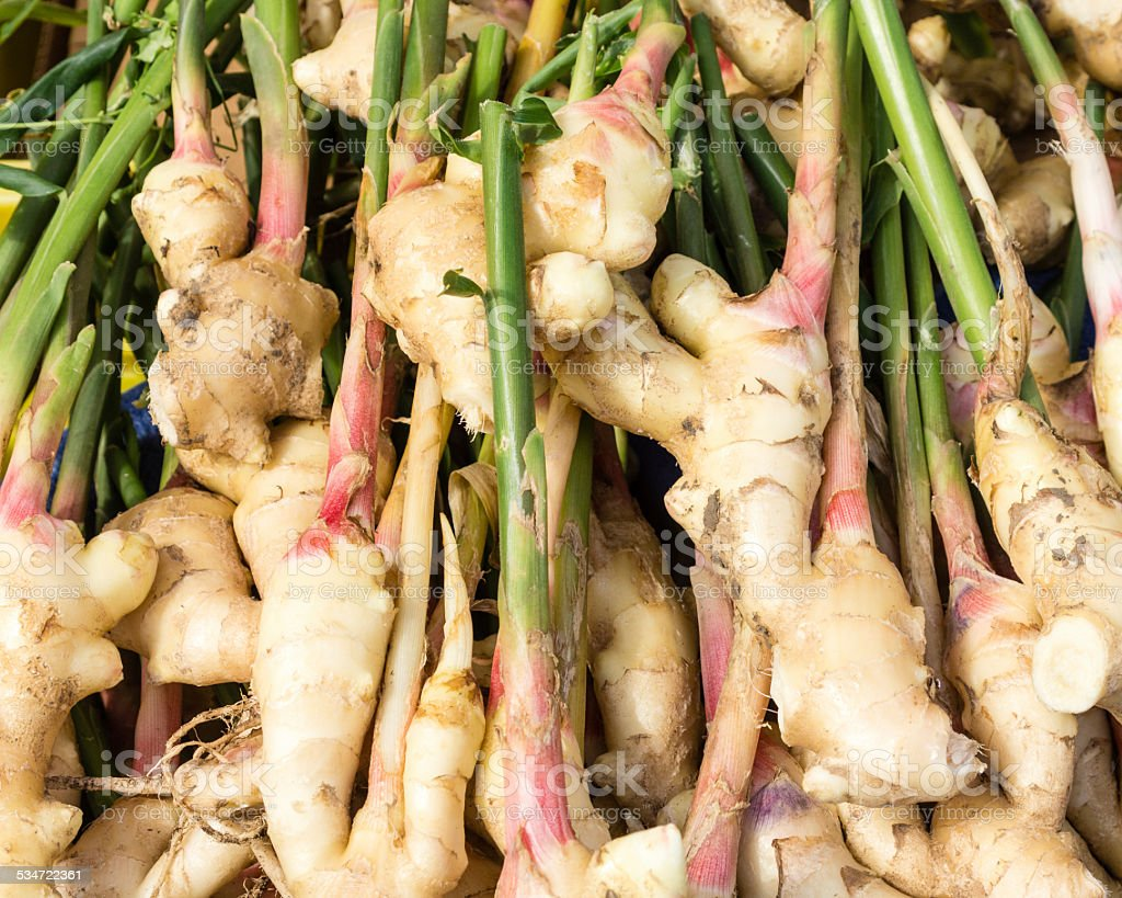 Display of fresh ginger root stock photo