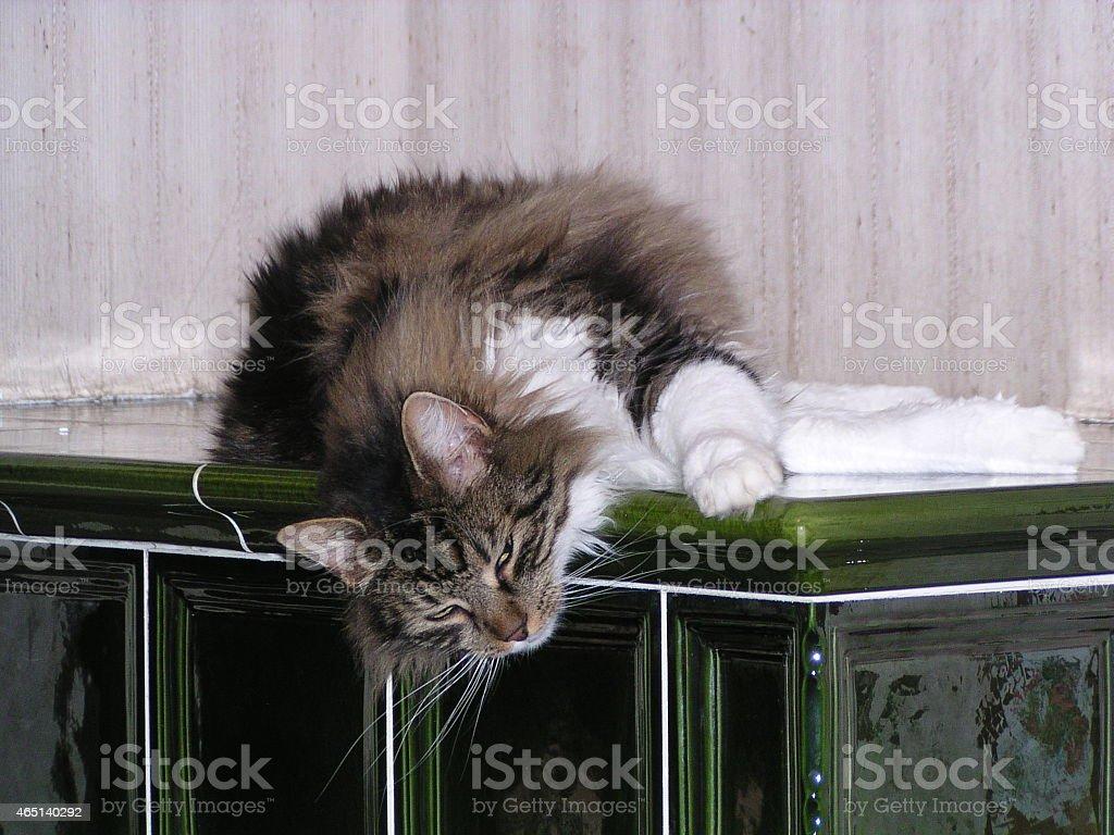 Displeased cat royalty-free stock photo