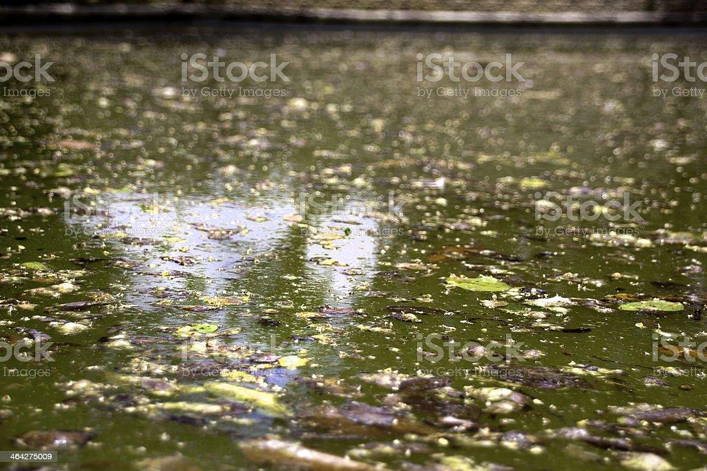 Disregarded Green Swimming Pool Surface stock photo
