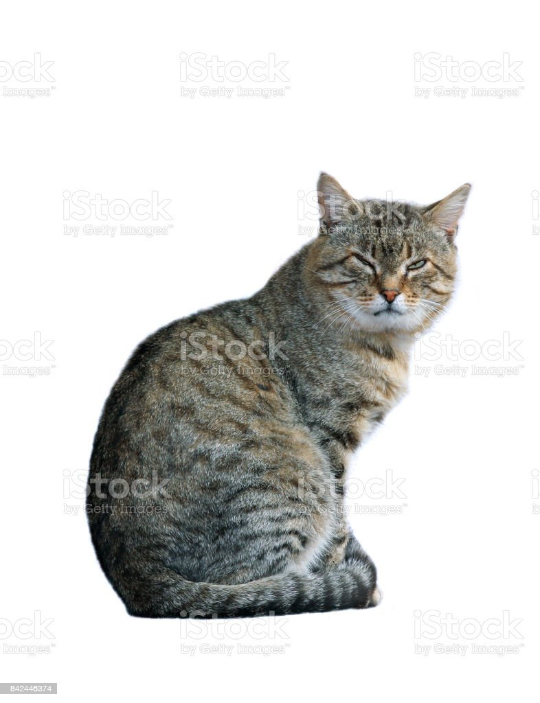 Dissatisfied with the cat sitting isolated stock photo