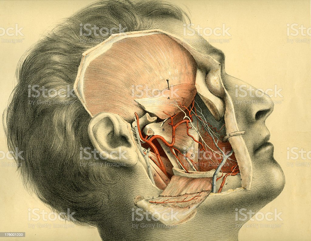 Dissected Head Scan royalty-free stock photo