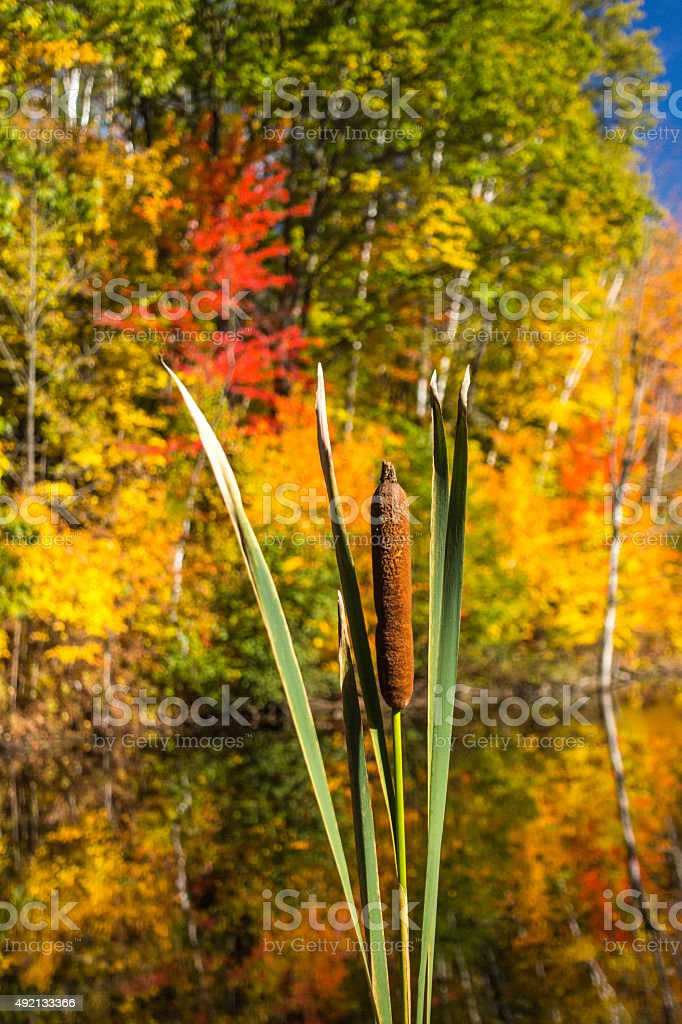 Distaff on autumn background stock photo