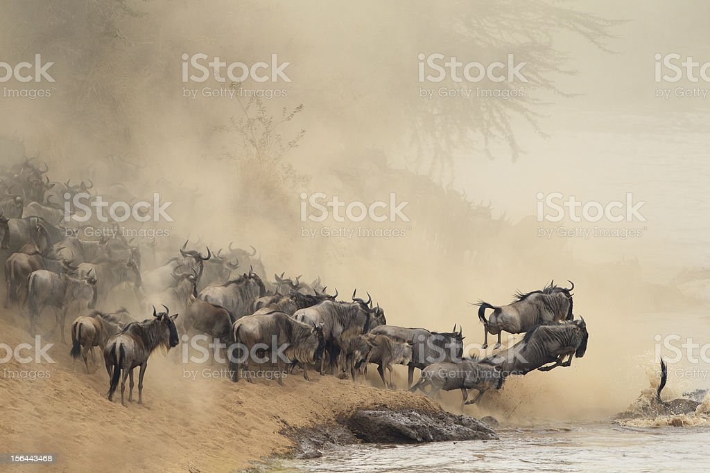 Distance view of migration of a herd of horses stock photo