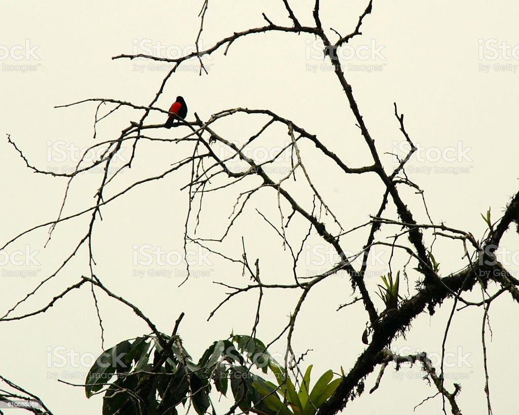 Distant Bird stock photo