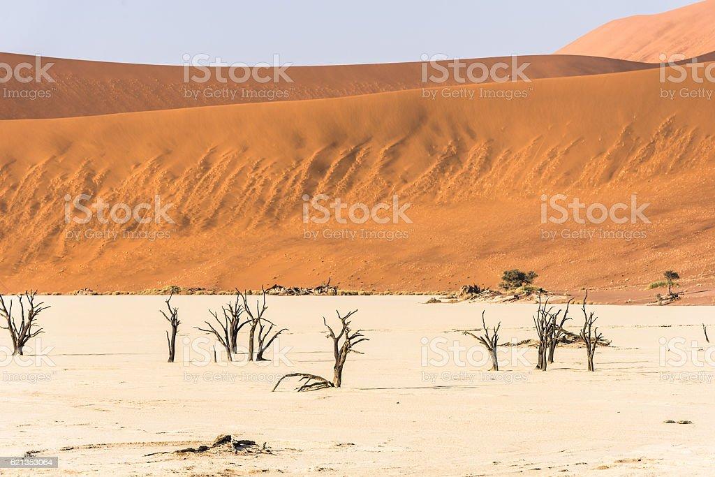 Distant dead dry trees of DeadVlei valley at Namib desert stock photo