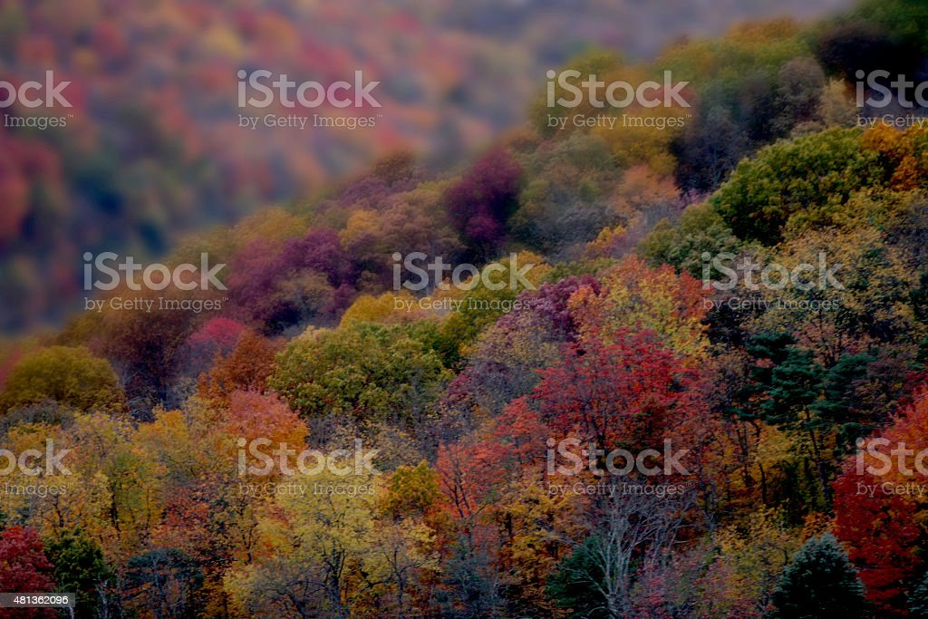 Distant detailed view of autumn trees stock photo