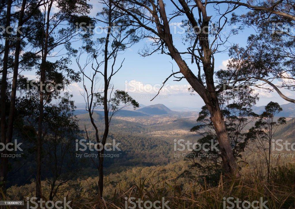 Distant hills viewed through Eucalyptus trees royalty-free stock photo