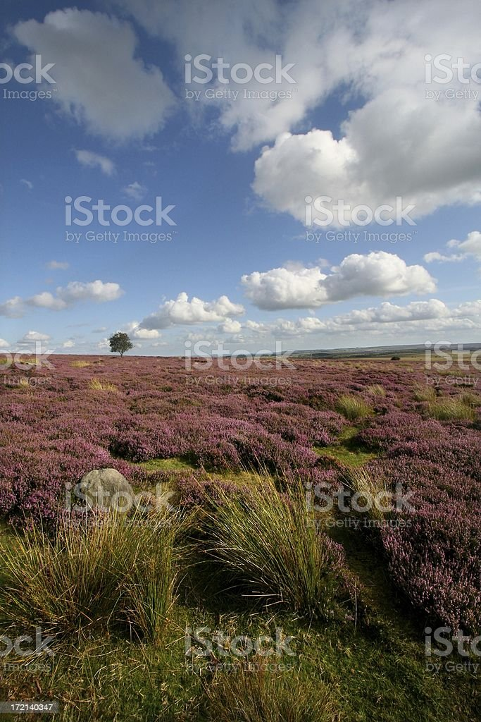 Distant Lone Tree royalty-free stock photo