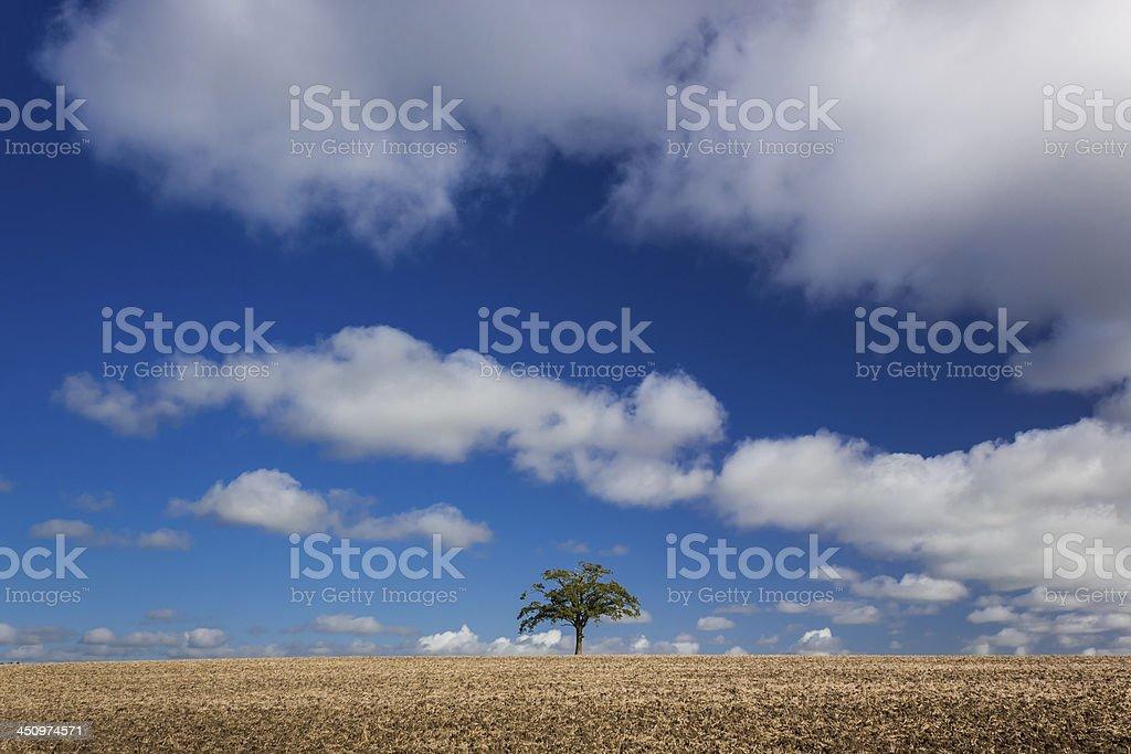 Distant Lone Tree stock photo