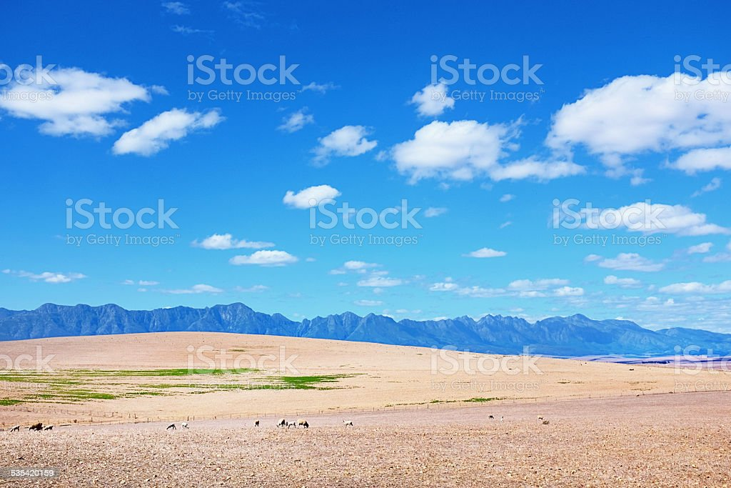 Distant mountains, dry land, and grazing sheep under blue sky stock photo