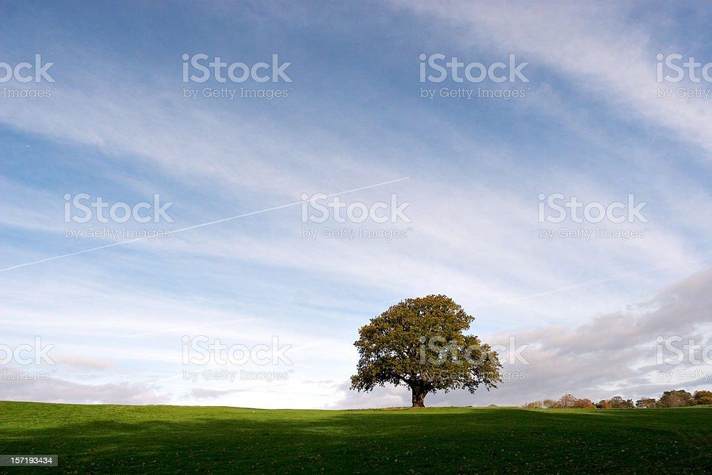 Distant Oak royalty-free stock photo