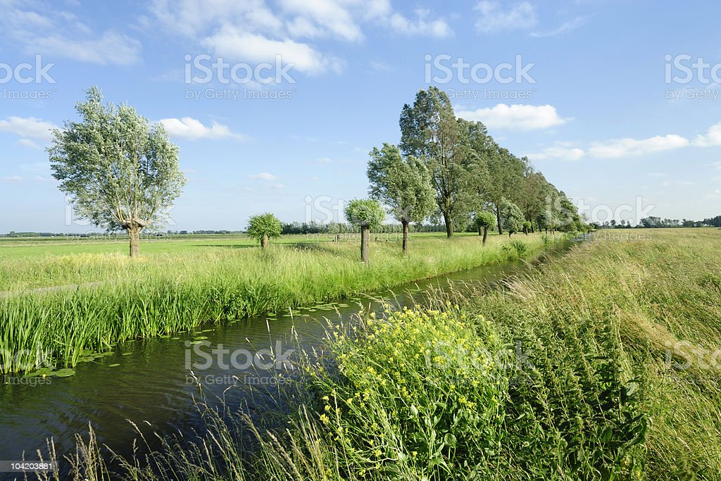 Ditch in summer royalty-free stock photo
