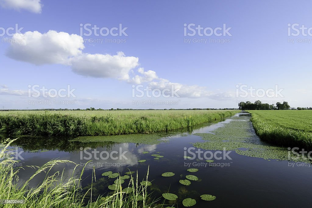 Ditch in summer stock photo